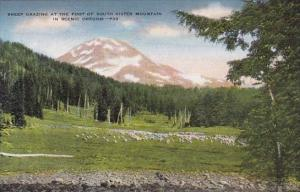 Oregon South Sister Mountain Sheep Grazing At The Foot Of Sheep Grazing At Th...