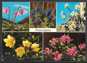 Switzerland, Flora Alpina (Alpina Flowers) unused