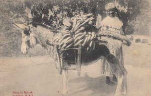 DOMINICA , B.W.I. , 00-10s ; Donkey Loaded with Bananas, Going to Market