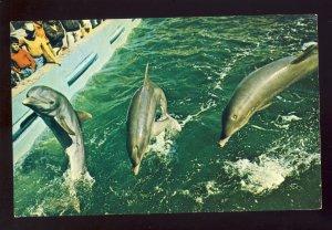 Provincetown, Massachusetts/MA Postcard, Marine Aquarium, Dolphin, Cape Cod
