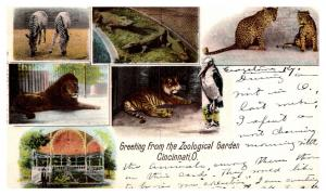 Ohio Cinncinnati , Multi-view of Zoological Garden , animals