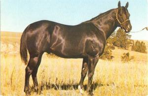 Moolah Bee Sweet 603211 Champion Quarterhorse Franktown CO