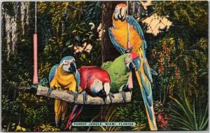 Parrot Jungle, Miami, Florida, The Macaws, Swing Quartet, Linen postcard 1950