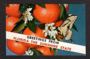 FL Greetings FLORIDA Butterfly Postcard Tangerines