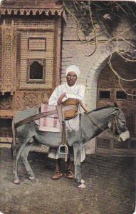 Egypt Cairo Donkey Boy