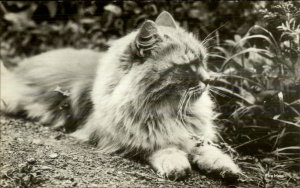 Long Hair Fluffy Cat Jolly House New York City Real Photo Postcard