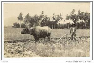 RP  Farmer & water Buffalo plow in field, 00-10s