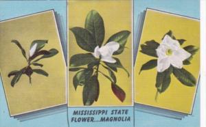 Flowers Magnolia Blossom The Mississippi State Flower