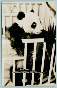 Brookfield Illinois~Chicago Zoo~Giant Panda in Baby Crib~Visited Today~1940 RPPC