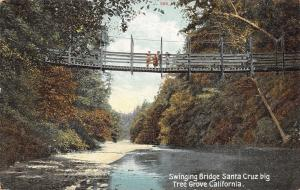 Santa Cruz Big Tree Grove California~Kids on Swinging Bridge~1908 Postcard