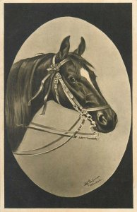 Horse M. Schonian artist signed postcard