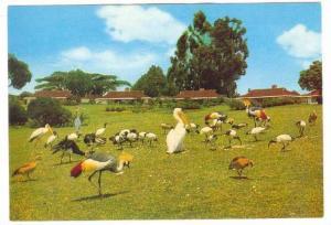 Mt. Kenya Safari Club, Nanyuki, Kenya, Africa, 1950-1970s