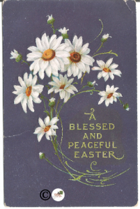 White Pained Daisies on Ultra Violet A Peaceful Easter Easter Greeting Postcard