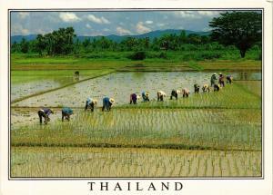 CPM THAILAND Thailand (345133)