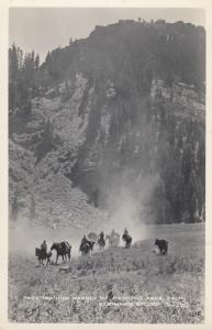 RP: Pack Train In MARBLE MT. Primitive Area, California, 40-50s; Horses & Donkey