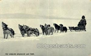 Dog Sledding, Old Vintage Antique Post Card Post Cards