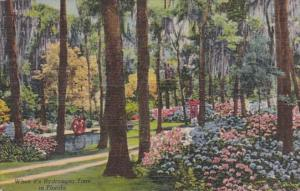Flowers When It's Hydrangea Time In Oriental Gardens Jacksonville Florida 195...