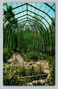 San Diego CA, San Diego Zoo, Rain Forest, Chrome California Postcard