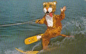 Florida Cypress Gardens Timmy The Tiger Water Skiing