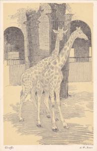 Giraffes , 30-40s