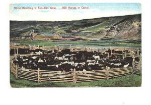 900 Horses in a Corral,  Ranching, Canadian West, WG MacFarlane, Made in Germany