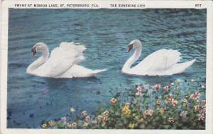 Florida Saint Petersburg Swans At Mirror Lake The Sunshine City 1936