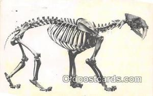 Saber Tooth Cat Los Angeles County Museum of Natural History, USA Postcards P...