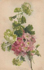 AS: Still Life: Hydrangea & Shirley Poppies, 1900-10s