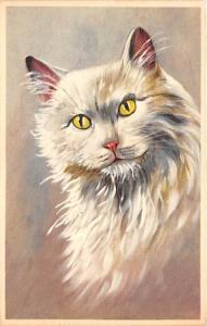 Cat Post Card Old Vintage Antique White Cat Unused