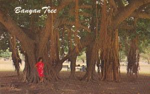 Hawaii Banyan Tree at Lahaina Maui