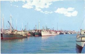 Harbor Scene, Wildwood, New Jersey, NJ, Chrome