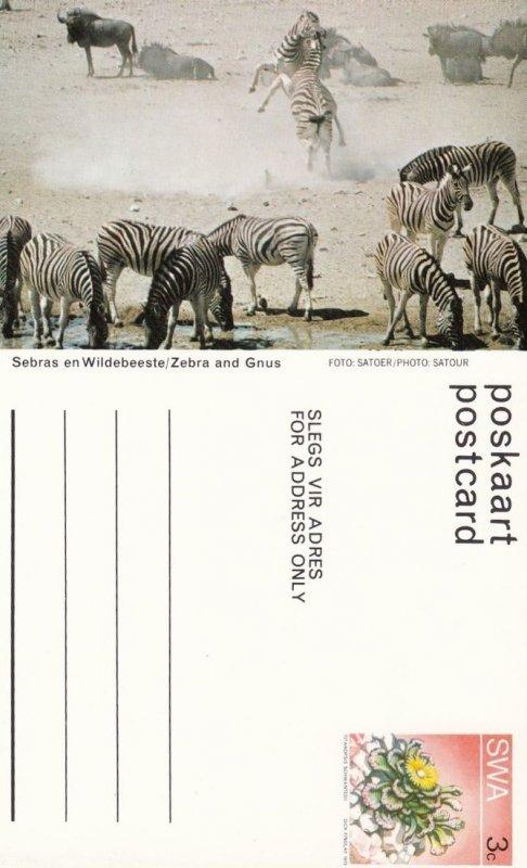 South West Africa (SWA) now Namibia ; Zebras , 40-60s