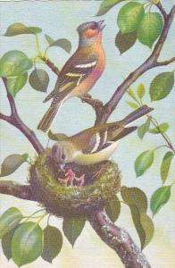Beautiful Birds by Alfred Mainzer