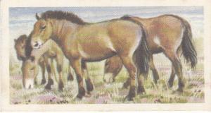 Trade Card Brooke Bond Tea Asian Wild Life No 41 Mongolian Wild Horse