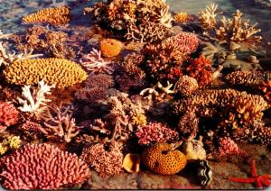 Australia Queensland Coral Of The Great Barrier Reef 1987
