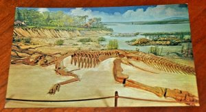 Post Card 1960s Anatosaurus Dinosaurs Museum University Michigan Joseph Morsello