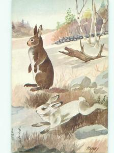 Pre-1980 signed WHITE HARE BUNNY RABBIT RUNNING AC5931