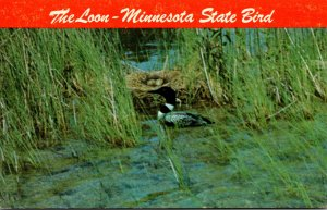 Minnesota State Bird The Loon