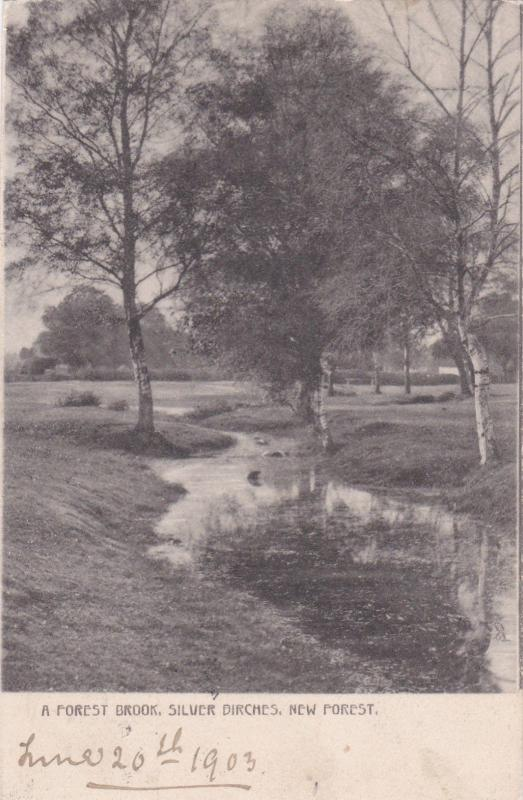 NEW FOREST , England, 1903; A Forest Brook, Silver Birches ; TUCK # 870