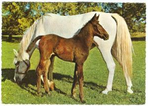 Horses, 1967 used Postcard