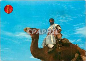 Postcard Modern Warrior of the Sahara Camel