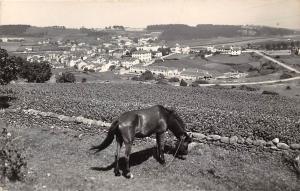 Spain Navia Barrio de San Francisco Horse Chevau Panorama