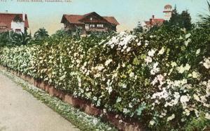 CA- Pasadena- Floral Hedge
