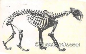 Saber Tooth Cat Los Angeles County Museum of Natural History, USA Postal Used...