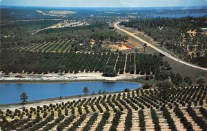 Citris Groves as Seen From Citris Tower Florida Citrus 1977