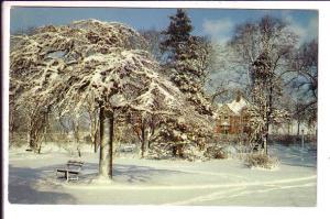 Winter Scene, Snow, Halifax, Nova Scotia, Canada
