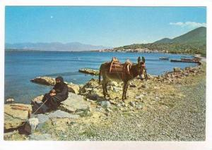Old woman & donkey, Greece,  50-70s