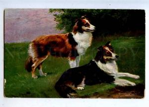 206741 HUNT Dog COLLIE by SCHONIAN vintage color TSN #537 PC