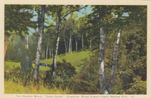 CAVENDISH, P.E.I. National Park, 1930s; The Haunted Woods, Green Gables