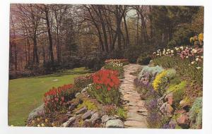Rock Garden Postcard Tulips Spring Flowers